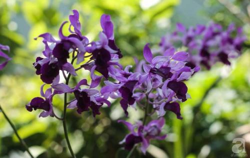 Khu vườn 600m² đẹp lãng mạn và rực rỡ hoa hồng của cô giáo dạy Văn ở Đà Lạt - Ảnh 19.