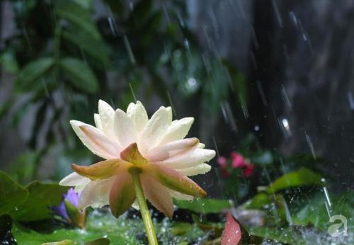 Khu vườn 600m² đẹp lãng mạn và rực rỡ hoa hồng của cô giáo dạy Văn ở Đà Lạt - Ảnh 17.