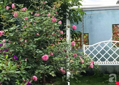 Khu vườn 600m² đẹp lãng mạn và rực rỡ hoa hồng của cô giáo dạy Văn ở Đà Lạt - Ảnh 1.