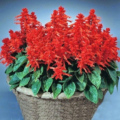 Tết đến rồi, chọn hoa theo mệnh gia chủ để cả năm được sung túc an khang, tài lộc dồi dào - Ảnh 5.