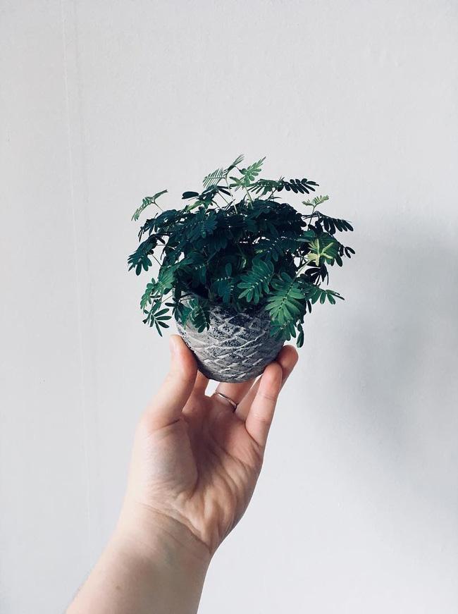 5 loại cây cảnh để bàn vừa độc đáo vừa rất dễ chăm sóc - Ảnh 2.