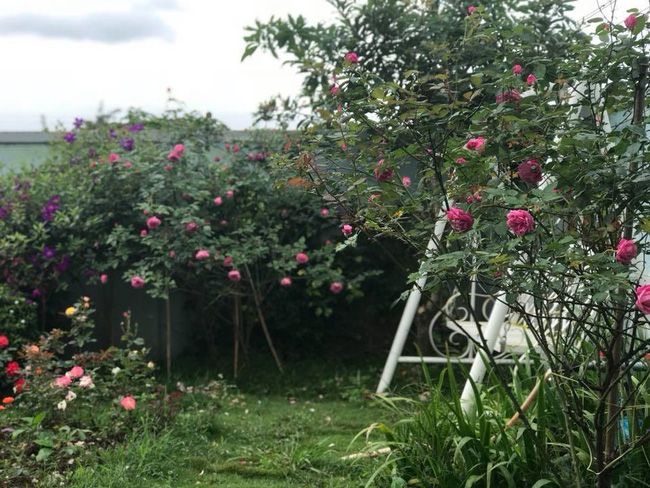 Khu vườn 600m² đẹp lãng mạn và rực rỡ hoa hồng của cô giáo dạy Văn ở Đà Lạt - Ảnh 2.