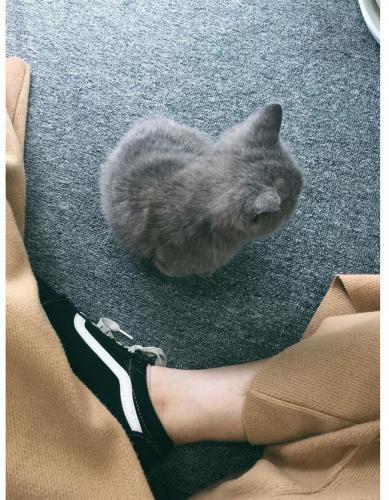 Chuyện ức chế của những chiếc ghế văn phòng: Ghế là thế giới riêng của chị, phải đâu chỗ em để con chơi, chó mèo ngồi! - Ảnh 3.