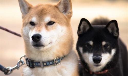 Cuoc 'khuyen chien' khoc liet o Bac Kinh